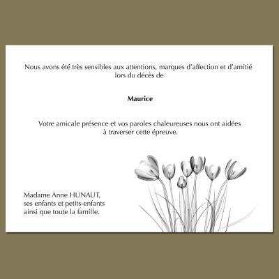 Les tulipes de la Bruyère
